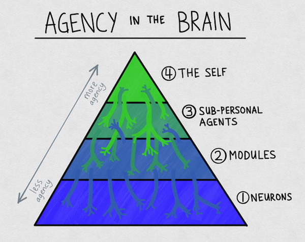 agency_in_the_brain