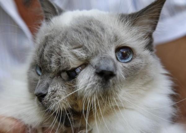 janus_cat