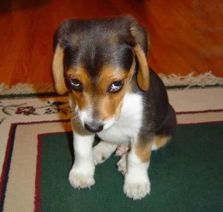shame_puppy